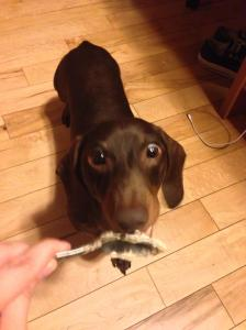 Dog Licks Spoon