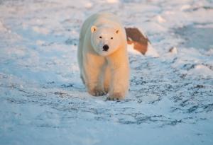 Polar Bear Seal River Lodge